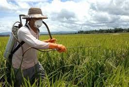 Пестициды и прочие химикаты повышают риск болезни Паркинсона