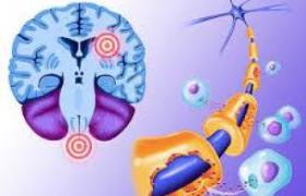 Отказ от молочных продуктов и мяса тормозит развитие склероза