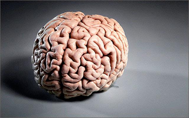 Ученые связали ожирение с последующими нарушениями когнитивных функций мозга