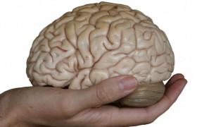Интеллект снижается после 45 лет