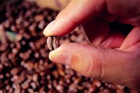 Кофеин лечит от паркинсонизма