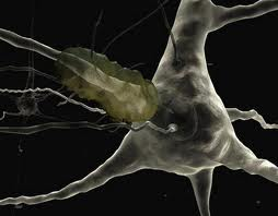 Зарядка спасет от болезни Альцгеймера