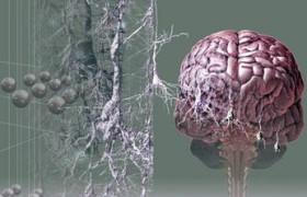 Беременные женщины имеют высокую активность мозга