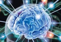Здоровье почек отражается на когнитивных функциях мозга