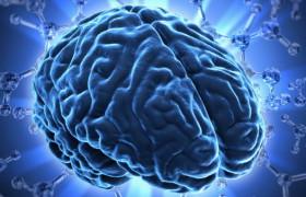 Мифы про мозг