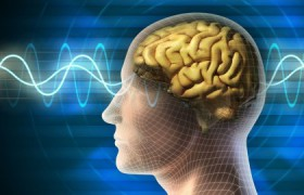 Обнаружен метод защиты человеческого мозга от последствий инсульта