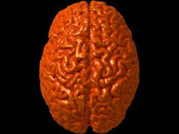 Может ли болеть мозг?