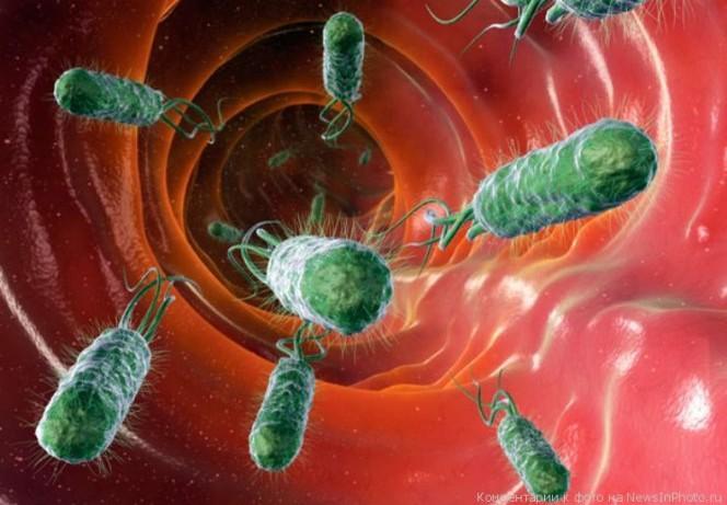 Бактерии полезны для мозга