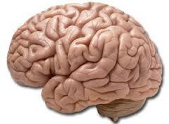 Готовность к риску определяется структурой мозга