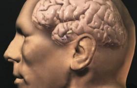 Ученые сравнили мозг здоровых людей и страдающих болезнью Альцгеймера