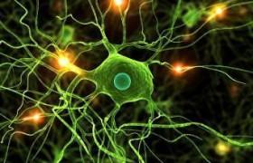 Природа против рассеянного склероза