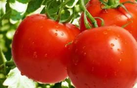 Названы симптомы аллергии на помидоры