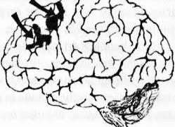 Нейронная активность мозга с возрастом почти не меняется