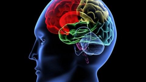 Оказывается, что за восприятие и воспроизведение речи отвечают разные участки мозга