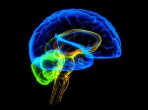 6 любопытных характеристик мозга