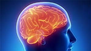 Вредные продукты разрушают клетки мозга