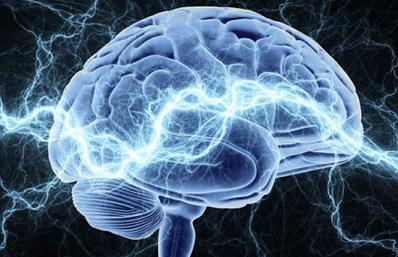 Ученым удалось вырастить копию человеческого мозга