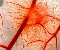 Вегето-сосудистая дистония: симптомы