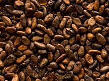 Экстракт какао и шоколад — вкусное спасение от старческого слабоумия