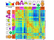 Исследователи создали уникальную карту мозга