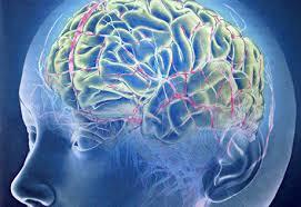 Сканирование мозга показало, как избавиться от тревоги