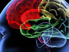 Активность головного мозга может показать вероятность формирования алкогольной и сексуальной зависимости