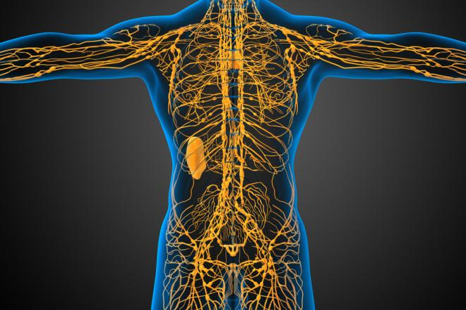 Ученые обнаружили в головном мозге здорового человека лимфатическую систему