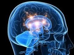 Высокие нравственные рассуждения связаны с увеличением объема серого вещества в головном мозге