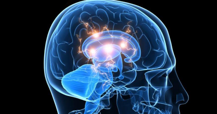 Как ген шизофрении воздействует на головной мозг
