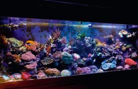 Особенности выбора рыбок для домашнего аквариума