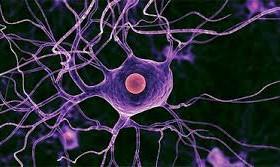 Нервные клетки спинного мозга восстанавливаются
