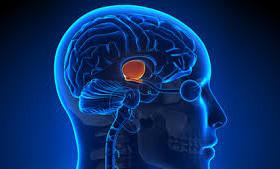 Здоровое питание улучшает работу головного мозга