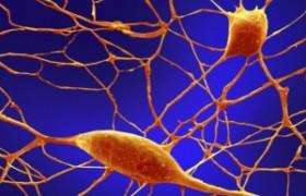 Инъекция гидрогеля помогает восстановить головной мозг при лечении инсульта