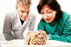 Ученые изучают, как мозг ориентируется в пространстве