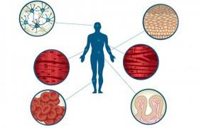 Болезнь Паркинсона будут лечить стволовыми клетками