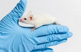 Лекарство от болезни Альцгеймера успешно протестировано на мышах