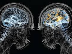 Исследователи идентифицировали ключевые клетки мозга, которые управляют циркадным ритмом