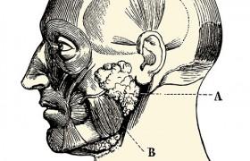 Биопсия тканей подчелюстной слюнной железы поможет обнаружить болезнь Паркинсона