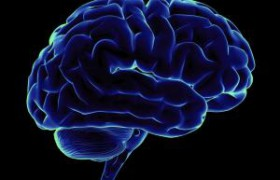 Ученые: мозг человека во время учебы сильно меняется