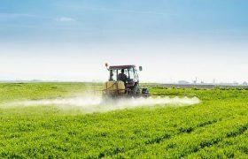 Токсины из овощей могут быть опасны для мозга