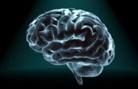 Ученые выяснили, как «стереть» и «перезаписать» память