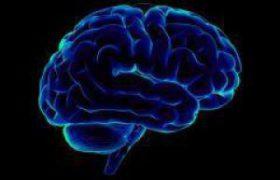 Создана подробная карту человеческого мозга