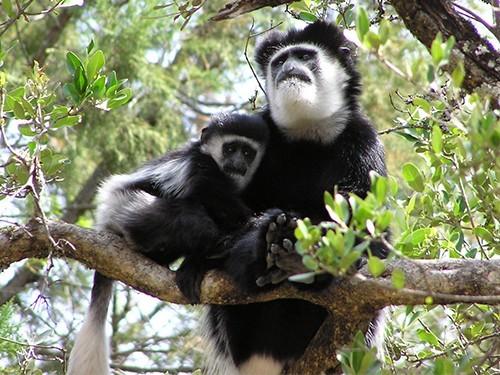 В Японии вывели обезьян с болезнью Паркинсона
