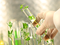 Препарат на основе каннабидиола эффективен в терапии т