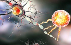 Виртуальный мозг поможет при лечении эпилепсии