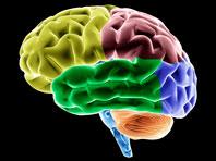Ученые поняли, как восстановить двигательные функции после повреждения мозга