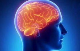 Головной мозг людей можно запрограммировать на альтруизм