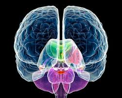 Медики: речь задействует оба полушария мозга