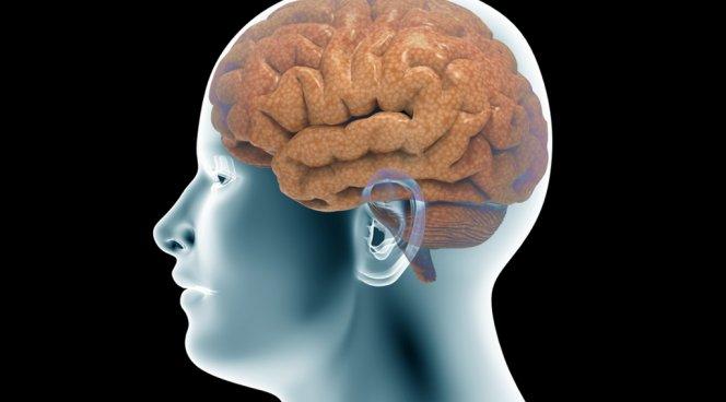 Обнаружены нервные клетки, усугубляющие состояние стресса