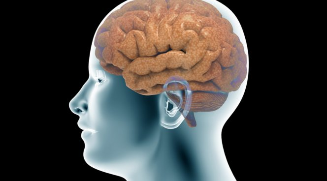 В головном мозге обнаружено подобие светофора